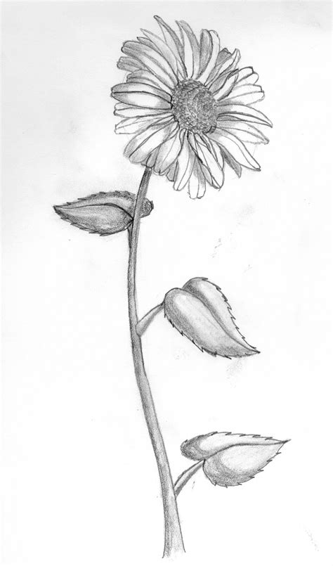 Sketches Flowers by Learning To Carve Musings Of A Novice