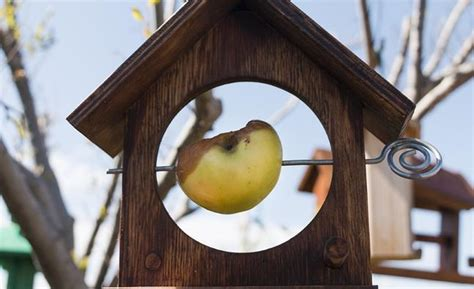 how to your to be a bird how to attract birds to your garden all 4