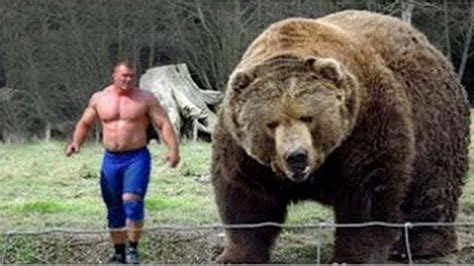 what is the largest in the world the top 10 top 10 bears in the world polar kodiak brown