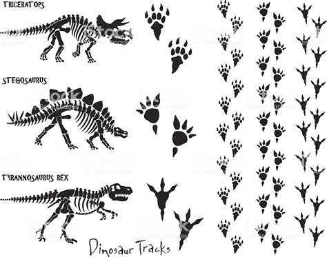 dinosaur skeleton footprints stock vector art