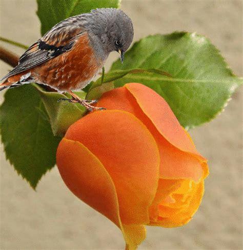imagenes bellas en pinterest gifs hermosos flores encontradas en la web
