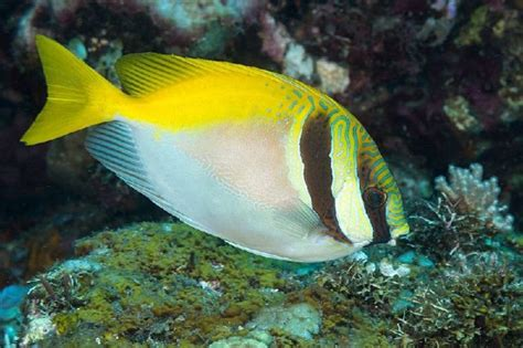 Pakan Ikan Hias Laut nama nama ikan laut dan gambarnya terlengkap nama nama hewan