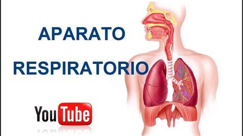 imagenes de caratulas de sistema geometrico partes del aparato respiratorio y sus funciones youtube