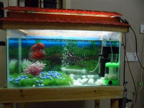 aquarium design mumbai small fish tank india freshwater fish image gallery