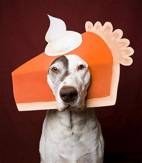 thanksgiving puppy cats challenge dogs to a thanksgiving fashion showdown