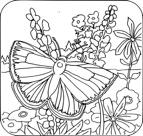 free printable butterfly coloring pages adults butterfly coloring pages coloringsuite com