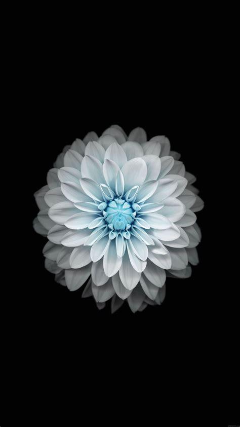 fonds decran fleuris pour iphone  ipad