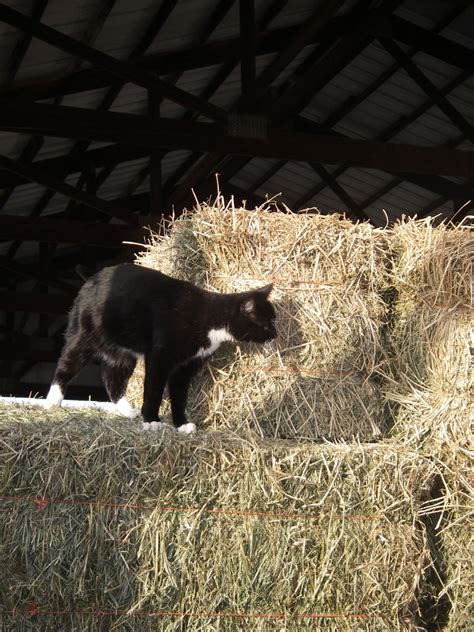 barn cat names barn cats two horses and me