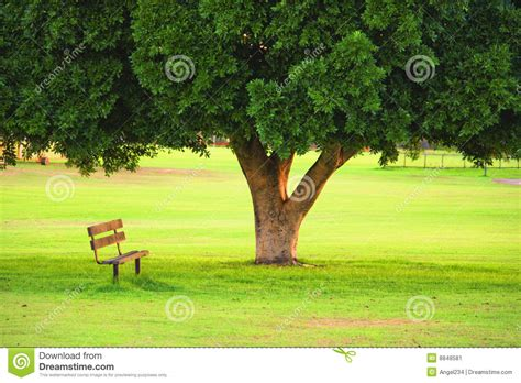wood chair  tree   garden stock image image