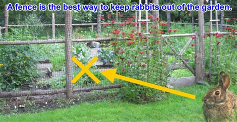 Keeping Rabbits Out Of Garden by How To Keep Rabbits Out Of Your Garden