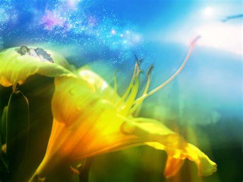 wallpaper flower fantasy wallpapers hd desktop wallpapers free online flower