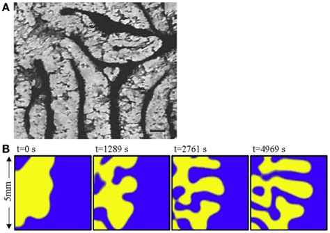 pattern formation in nonlinear systems frontiers non linear pattern formation in bone growth