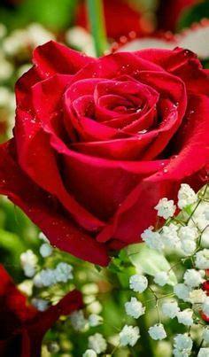Bunga Mawar Artificial 19 gambar bunga mawar hitam begitu cantik mawar hitam