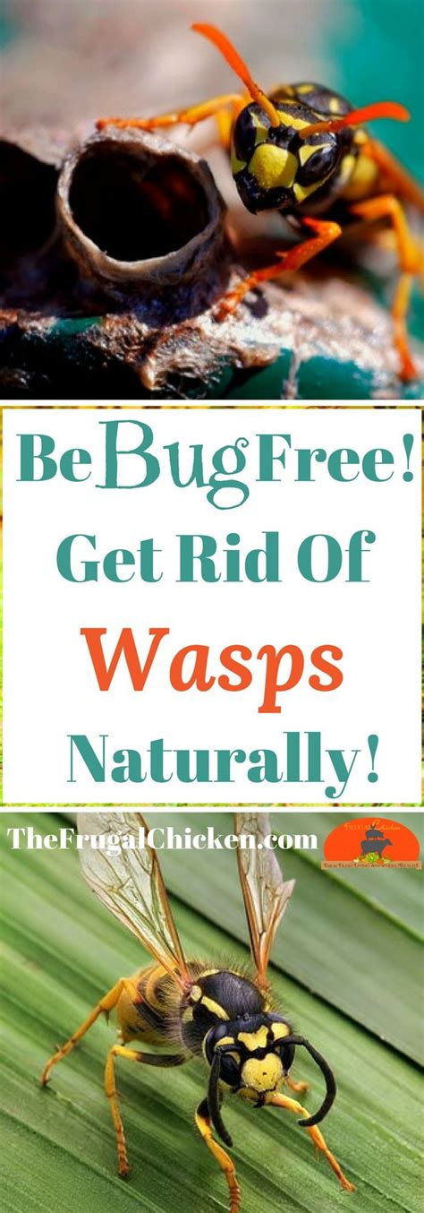 how to get rid of wasps in backyard 25 best get rid of wasps ideas on pinterest wasp killer