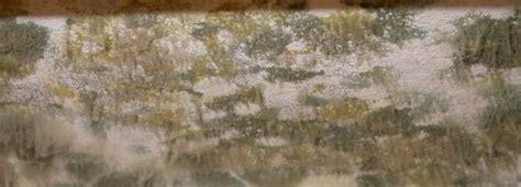 muffa negli armadi rimedi colori per dipingere sulla pelle