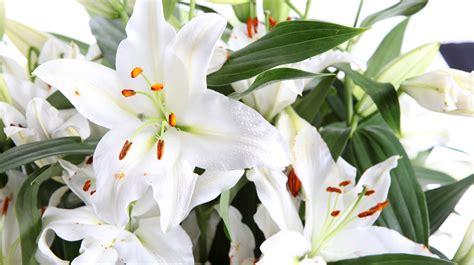 Langstielige Blumen by Liebevoll Blumen 20 Wei 223 E Langstielige Xl Lilien