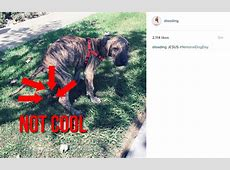 D'Angelo Russell shared a picture of his dog pooping for ... Lakers Roster