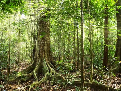 amazon jungle tropical rainforest brazil announces massive plan to survey amazon rainforest