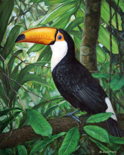 imagenes de animales jungla contrastes de la selva gabriel hermida artelista com
