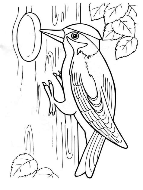 Woodpecker Coloring Pages woodpecker coloring pages and print woodpecker