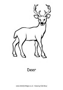 deer coloring page free coloring pages of deer with antlers
