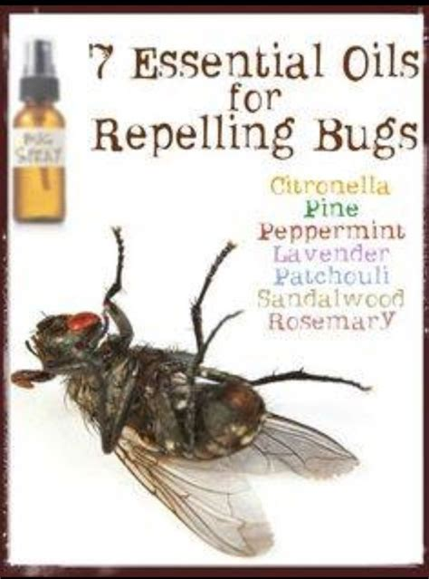 scents that repel bed bugs 23 best images about young living eos on pinterest