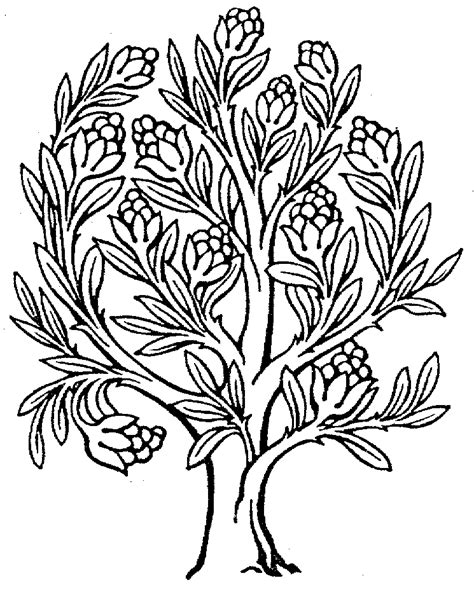 line drawings trees line drawings of trees clipart best