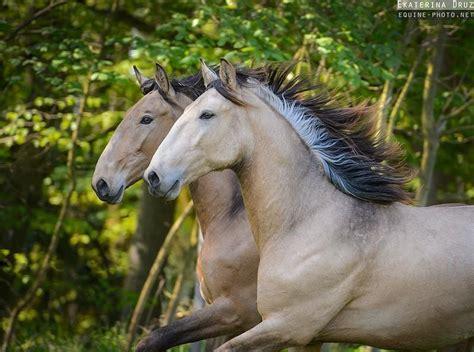 reitbeteiligung stall reitbeteiligung iberische pferde altm 252 hltall in