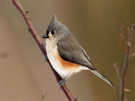 cute birds google search cute animals pinterest