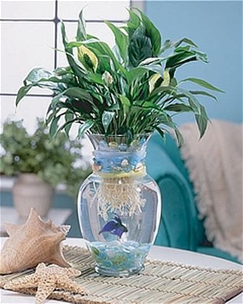 Betta Fish In Vase With Bamboo by What Didn T Kill Me Let S Talk About Pet Fish