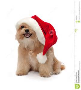 cute dog in christmas hat stock photo image of looking