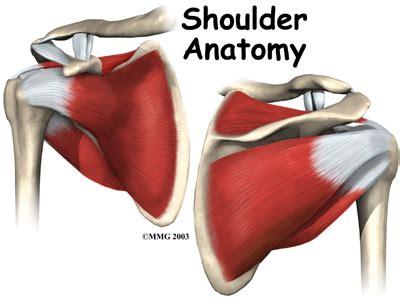 shoulder images shoulder anatomy eorthopod