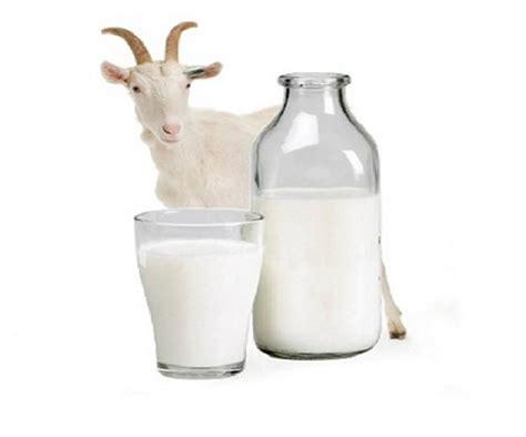 manfaat susu kambing  kesehatan