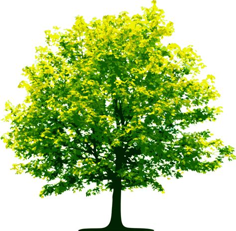 tree photos tree png images pictures free