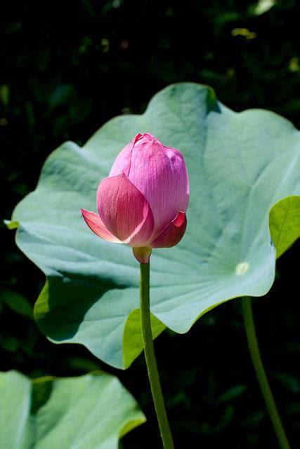 imagenes de rosas unicas en el mundo im 193 genes de flores 174 fotos de rosas margaritas o lirios