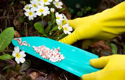 when to fertilize your flower and vegetable gardens