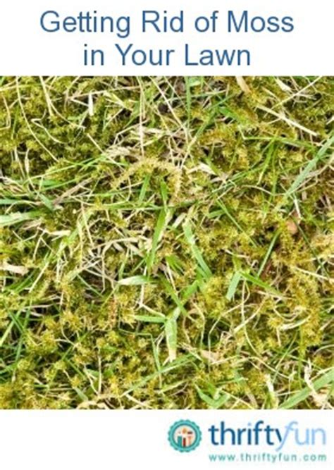 how to get rid of grass in flower beds getting rid of moss in your lawn thriftyfun