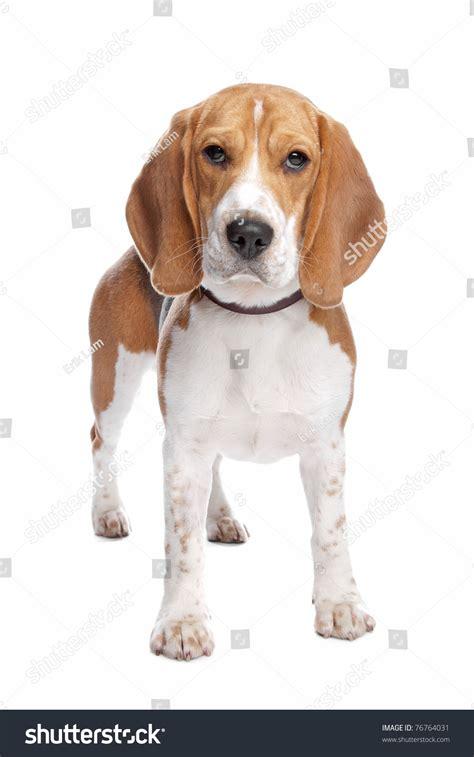 wallpaper dog bdfjade dogs pic bdfjade