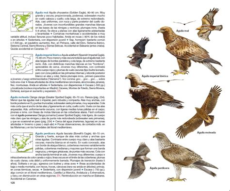 aves de espa 241 a lynx edicions aves de espa 241 a lynx edicions