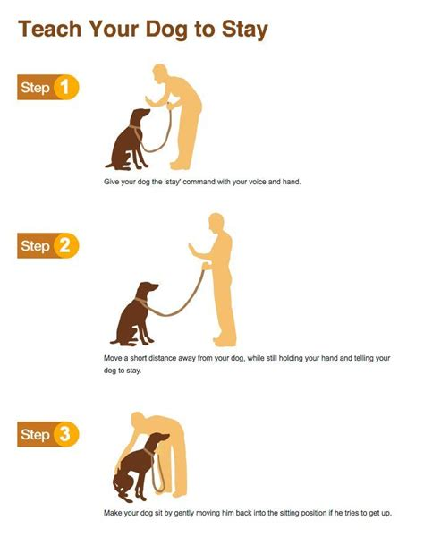 how to your tricks and obedience teach your to stay read more in http natureandhealth net dogs
