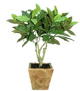 Potted Plants by Gallery For Gt Potted Plant