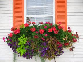 the impatient gardener how to plant a rockin window box