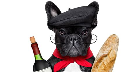 can dogs drink wine can wine stop hair loss