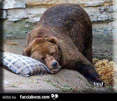 col cuscino buonanotte dall orso bruno col cuscino facciabuco