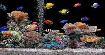 Free 3d fish tank screensaver hnczcyw com