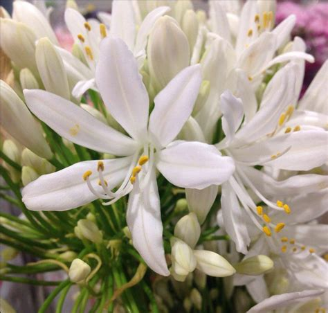fiori bellissimi da regalare cool foto fiori belli py76 pineglen