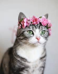 Cat Lotus Cat Flower Crown Lotus Pink Suddenly Cat