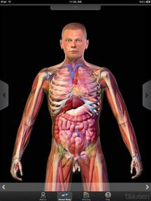 info world human body in 24 hours