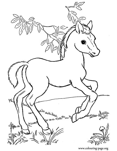 coloring pictures of baby horses horse coloring pages for adults coloring home