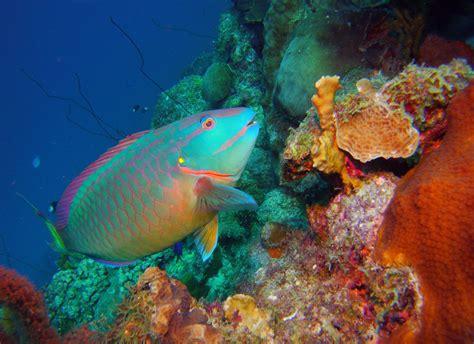 sea dragon 2500 photo video dive light sealife s sea dragon lights and strobe add color